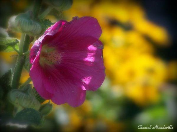 Last Flowers of Summer 3