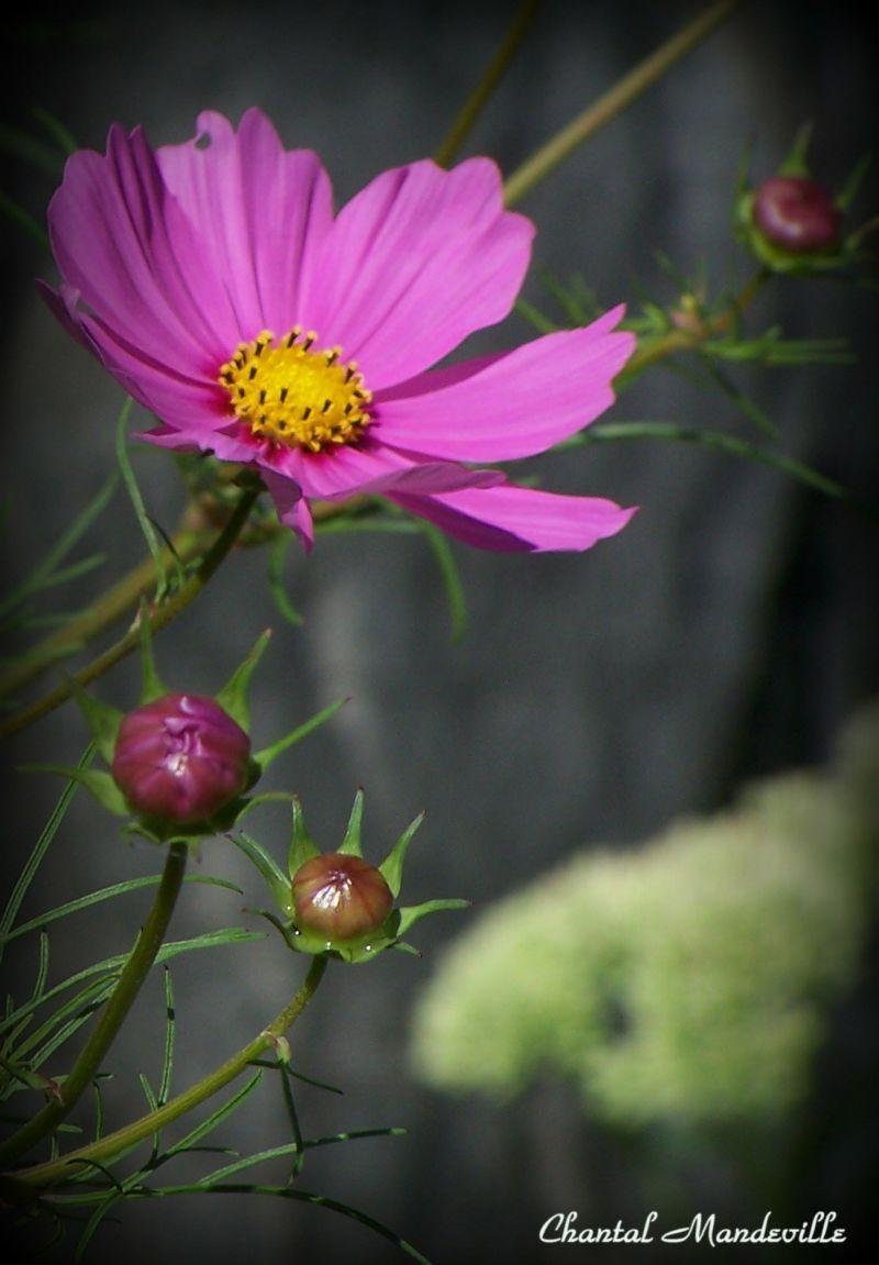 Last Flowers of Summer 4
