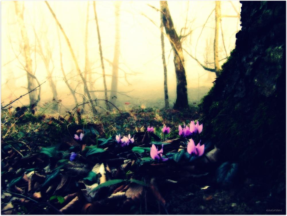 Violet flower mount
