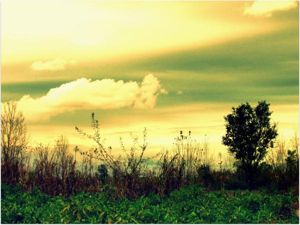 Silence Farm