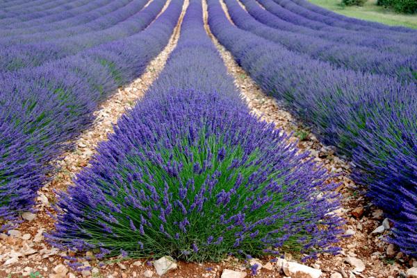 Senteurs de Provence avant l'automne