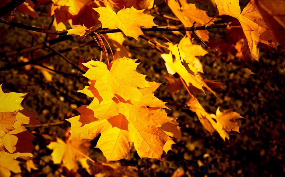 Du jaune pour vous.....!!!