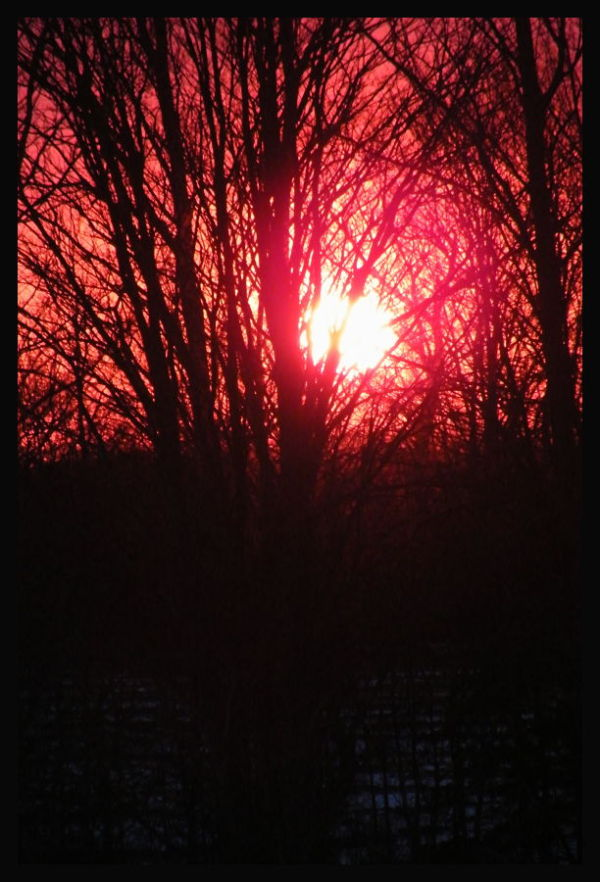 Sunrise - trees on our border