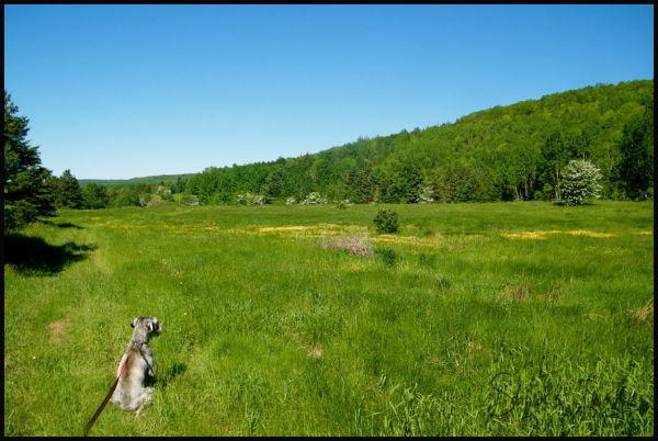 Shiva - wild meadow