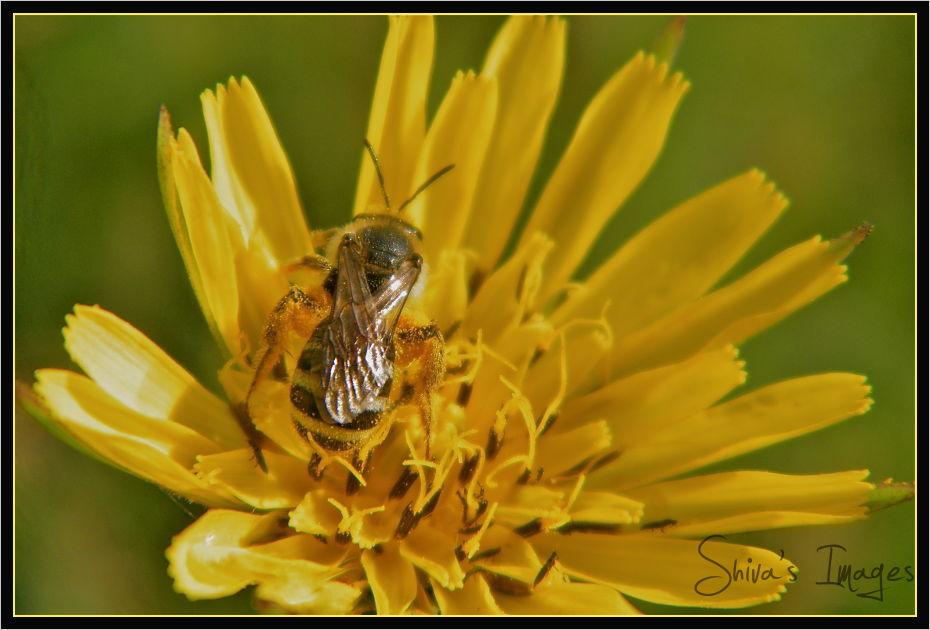 Flower - bee