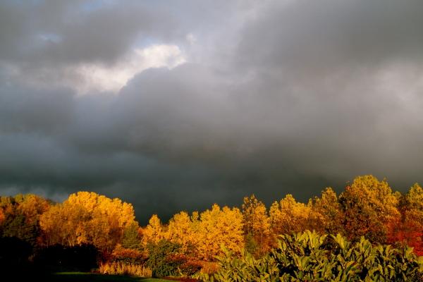 Pappeln - Sonne - wolken