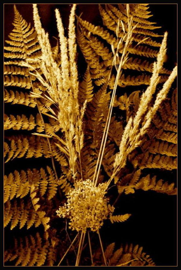 Dried grasses bouquet