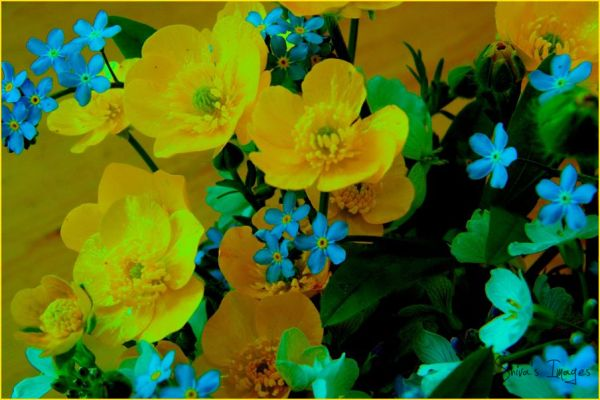 Buttercups and Forget me Not