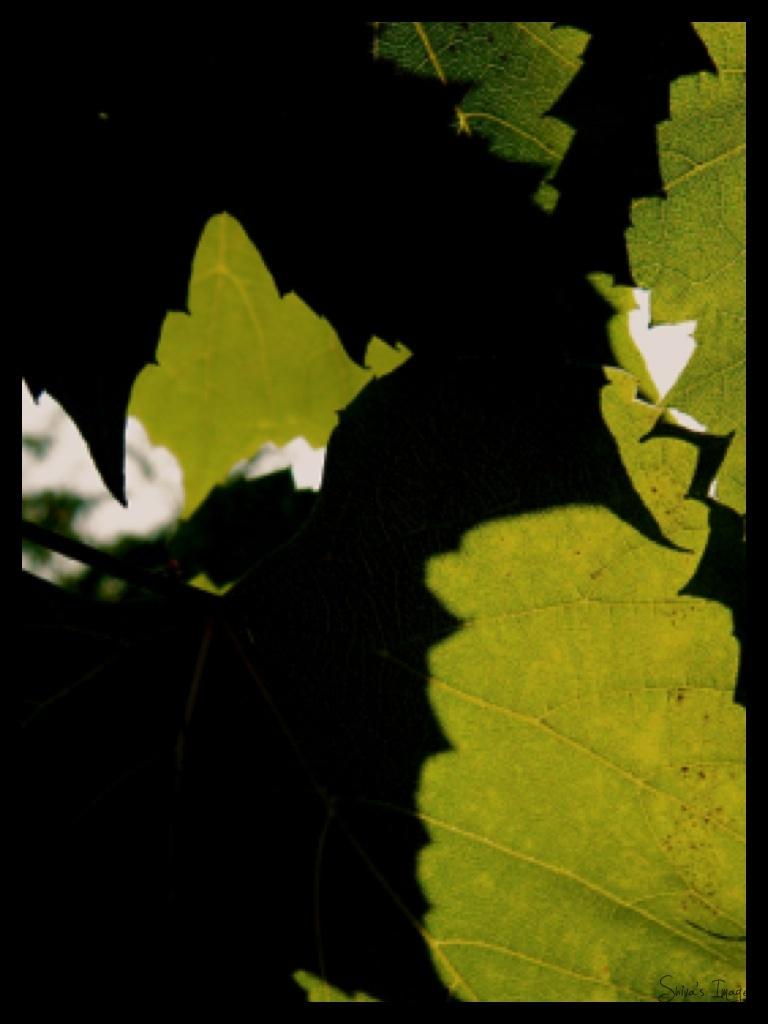 Wine - shadow