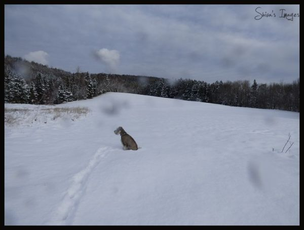 Shiva Rabbit Hill