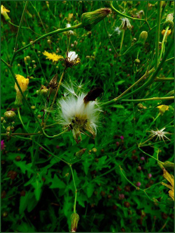 spot in the meadow