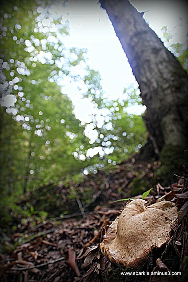Mushroom 56