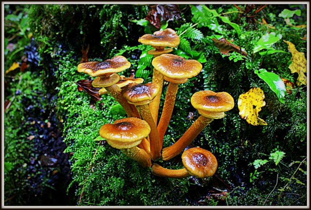 Mushroom 67-1