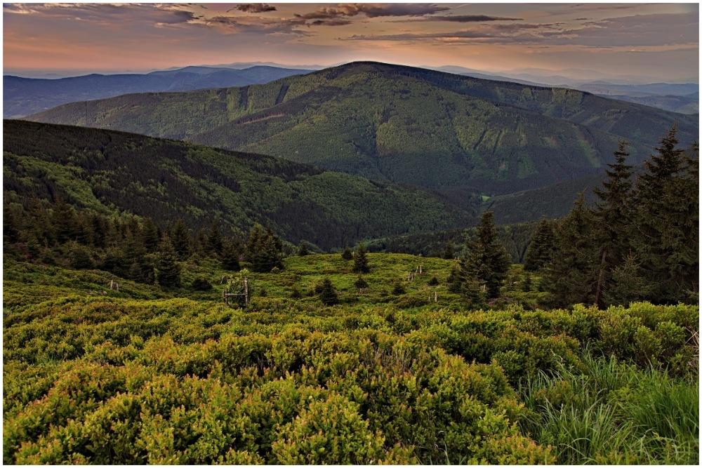 blueberry mountain