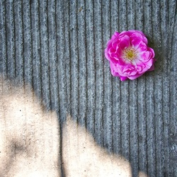 Flowers and concrete 1