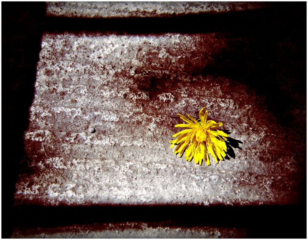 Flowers and concrete 2