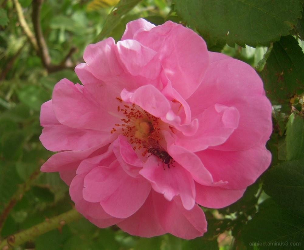 Dans la vallée des roses (Maroc)