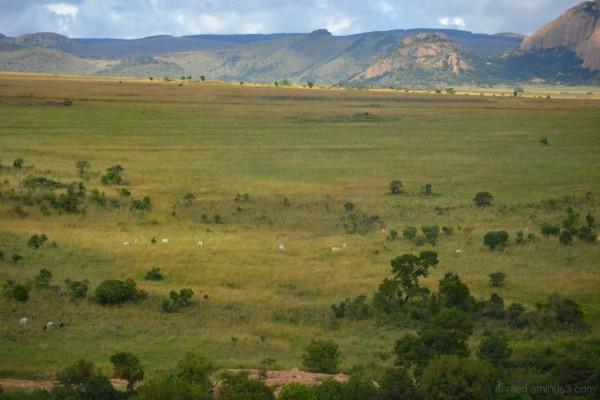 Afrique du Sud - 26