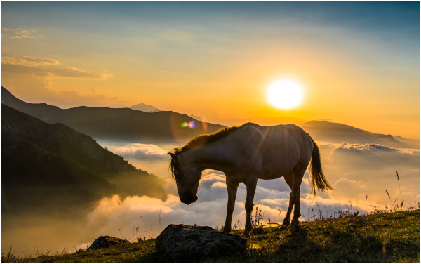 horse and sunset ....