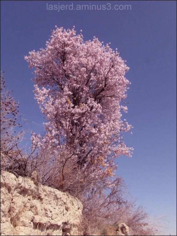 بهار روستای لاسجرد