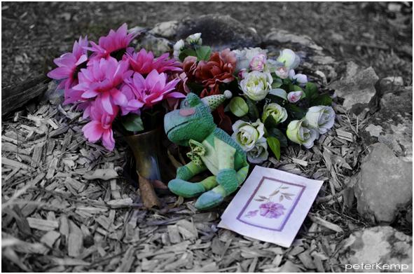 cemetery eleven