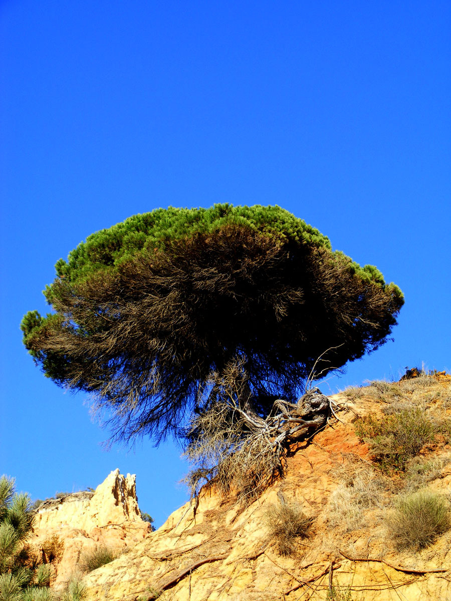 Tree on a clifftop