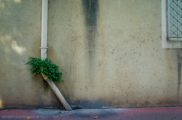 Plant growing on wall.