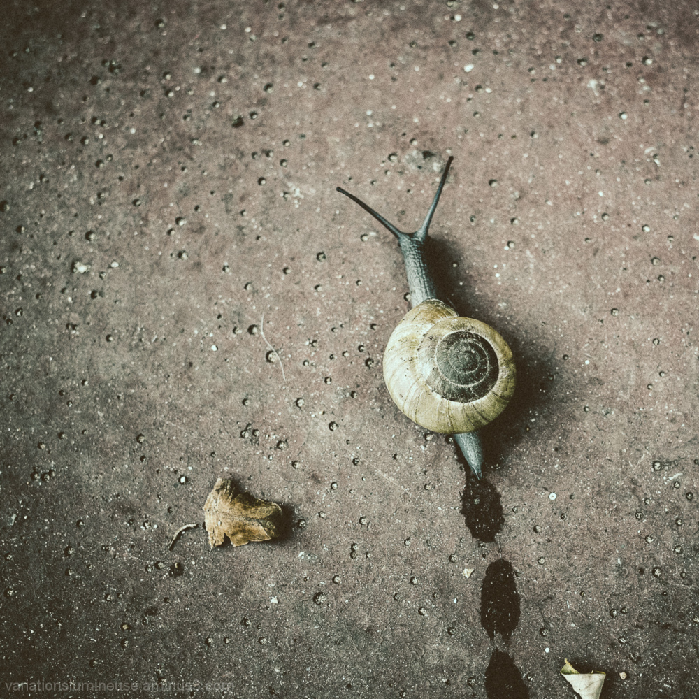 Snail on sidewalk.