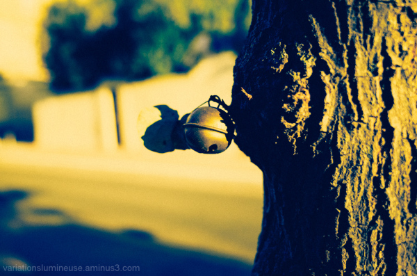 Bell hanging on a tree.