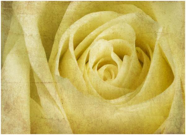 Textured flower