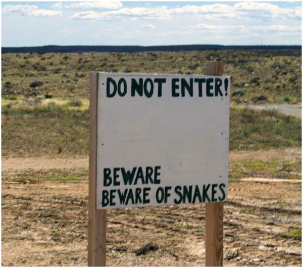 No snakes!