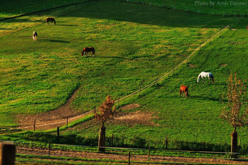 Nature , Natuur , طبیعت -  photo by AmIr Darowi