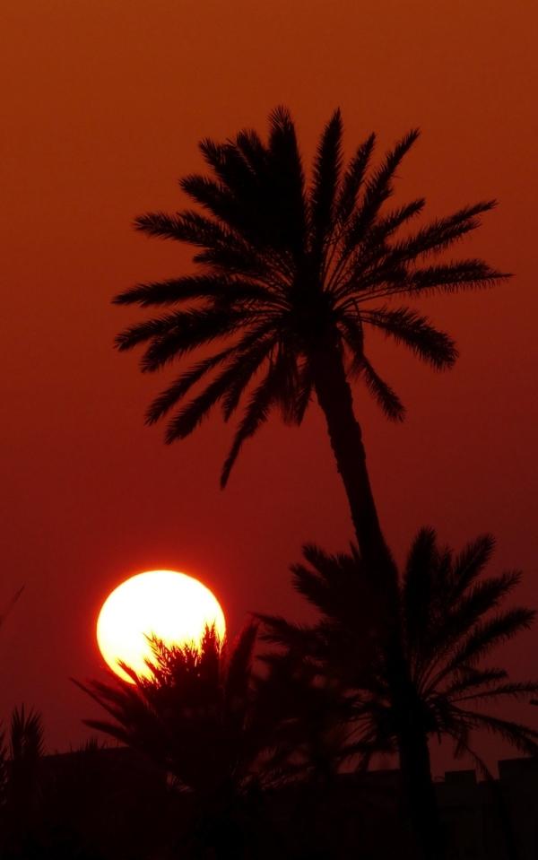Coucher de soleil sur les palmiers