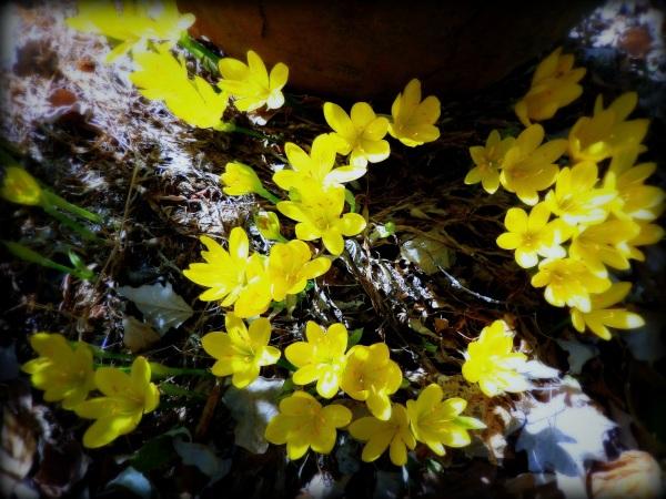 florecillas de otoño