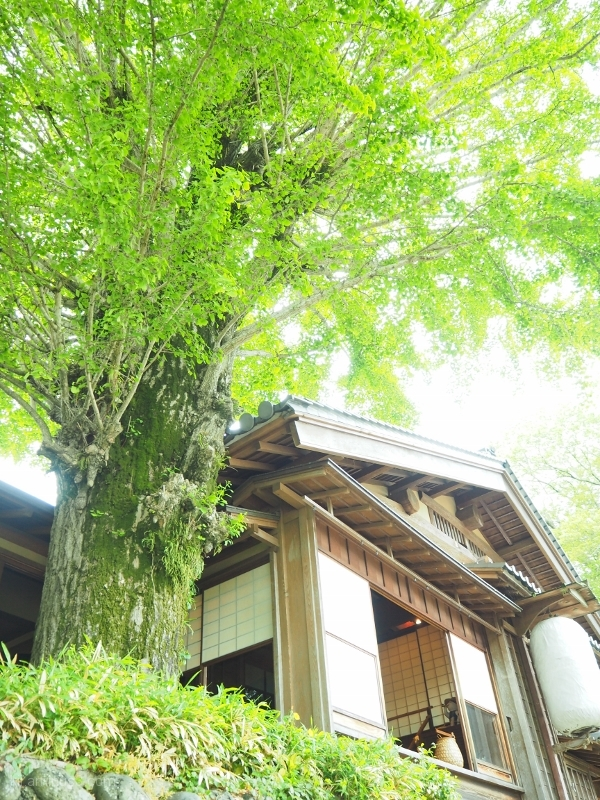 新緑の候 A House with New Green Leaves