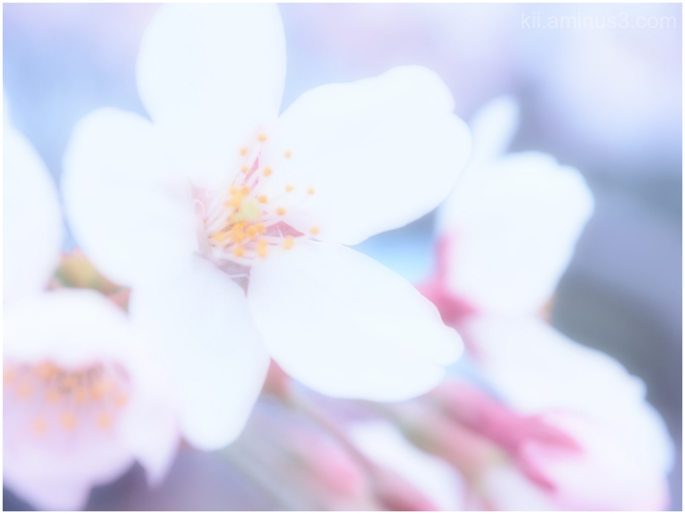 Sakura 2016