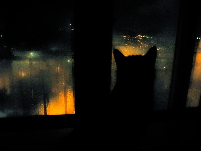 la nuit les chats noirs sont encore noirs