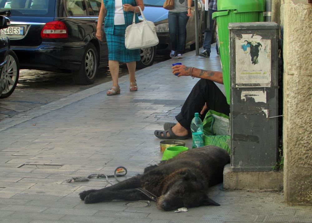 vie de chien, chienne de vie