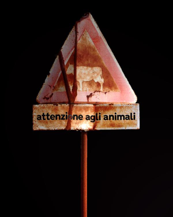 october 4 : world animal day