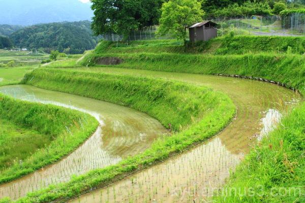 dual curve  (棚田, terraced rice paddy)