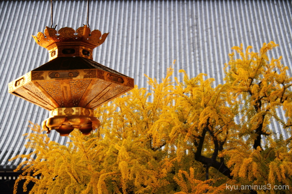 Ginkgo at the gate