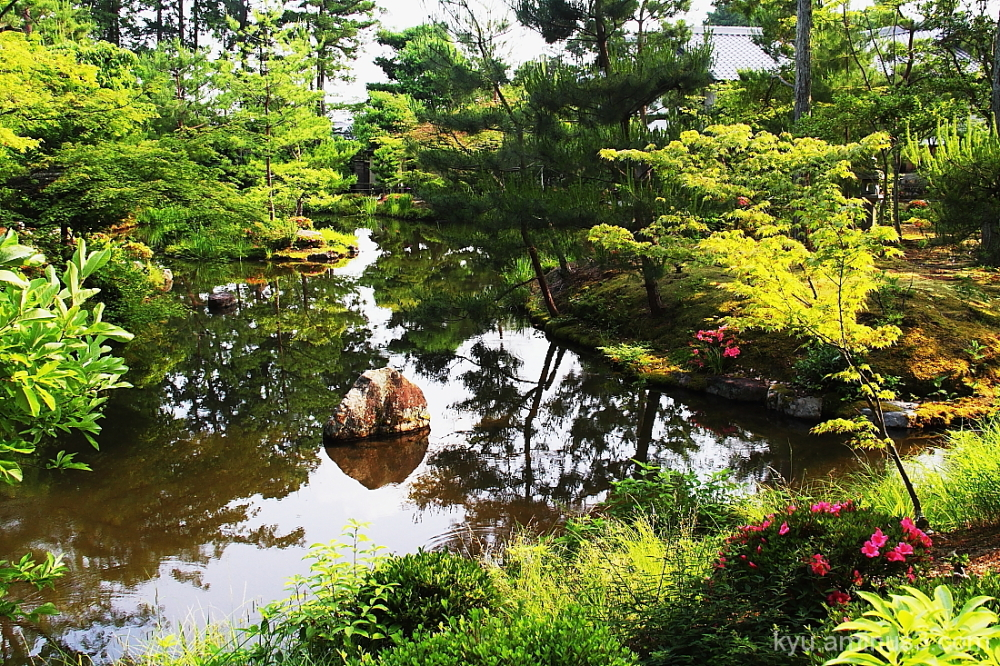 Reflections on the pond of the garden