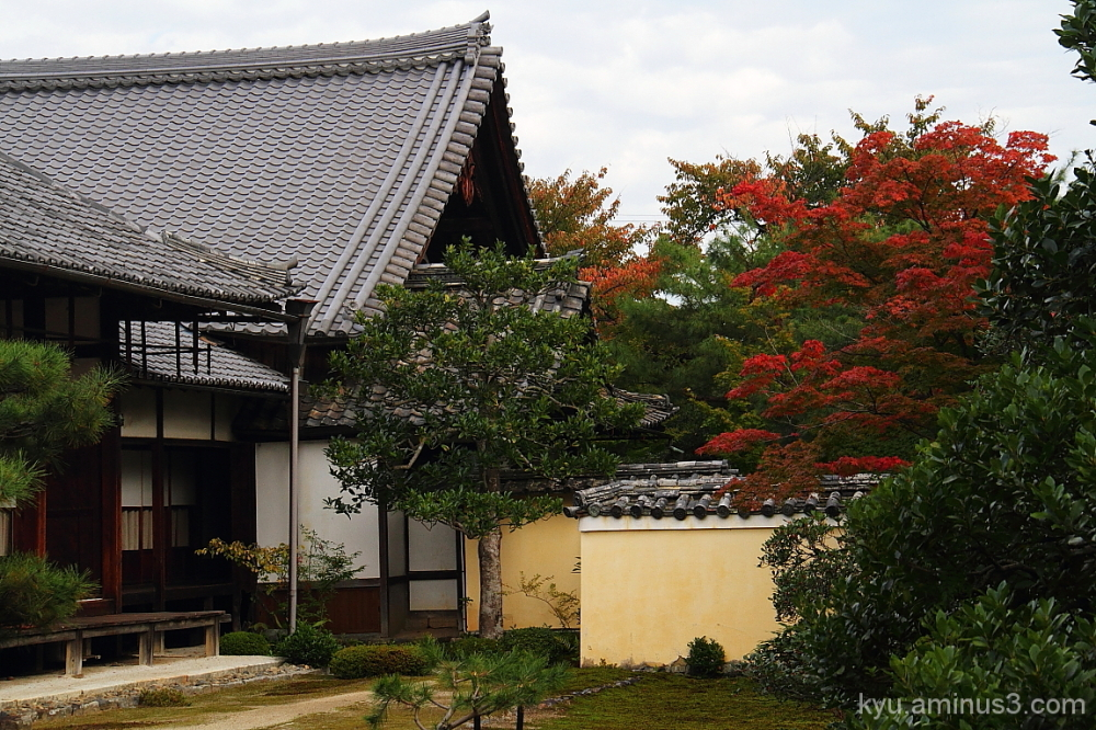 Enjoying the autumn at Rokuoin