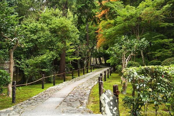 Walking in green