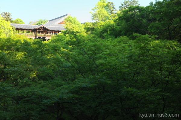 Lush green