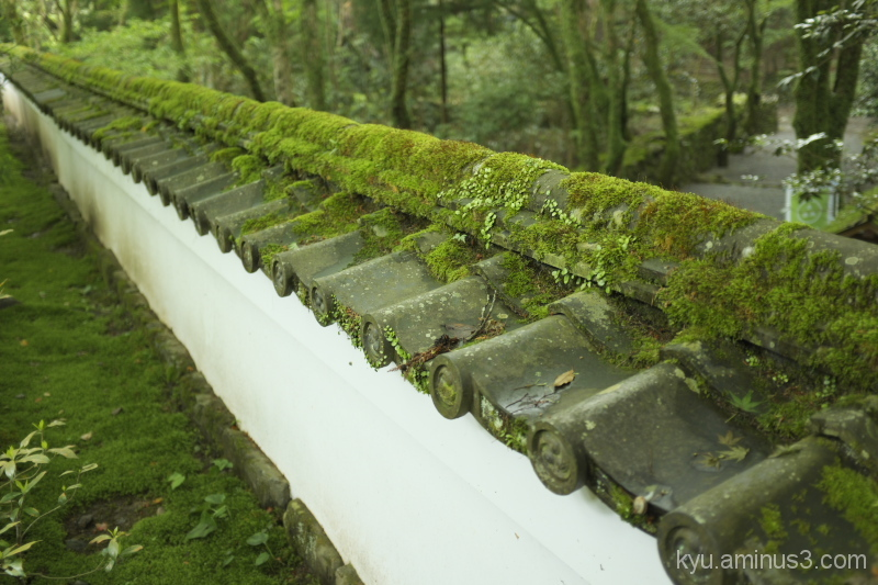 Wall in the moss-green