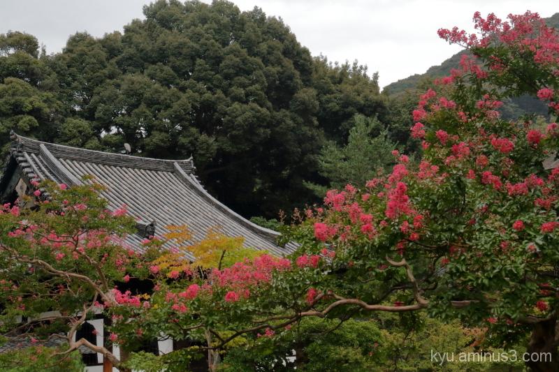 Garden in summer flowers