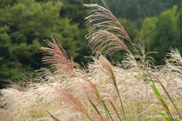 Autumn scene in a field
