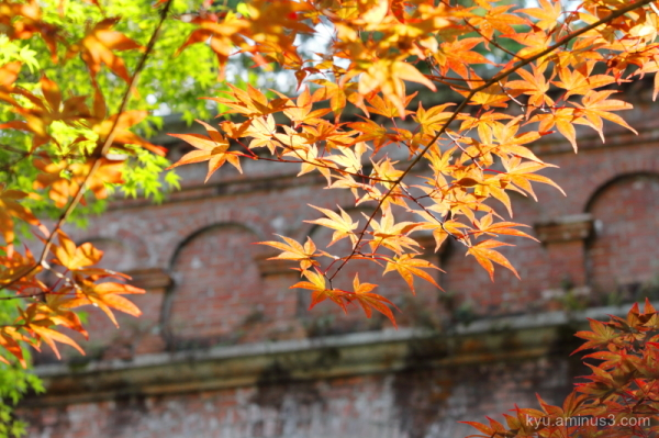 Looking for an autumn scene in Nanzenji