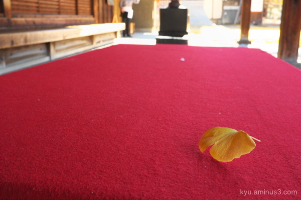A leaf on a red carpet